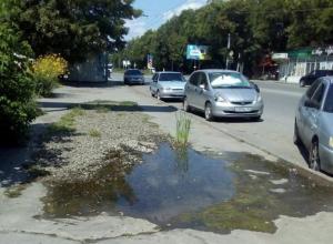 В Таганроге лужа посреди тротуара превратилась в озеро, где пророс камыш