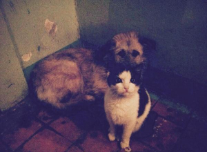 Кошка, взявшая шефство над собакой умилила жителей Таганрога