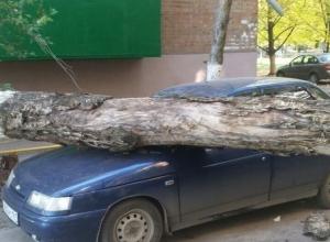 Сильный ветер в Таганроге уронил деревья и балкон