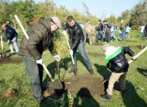 20 октября в Таганроге высадят 746 деревьев