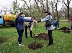 Более шести тысяч квадратных метров зеленых насаждений появилось в Таганроге
