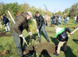 Традиционный день древонасаждения пройдет в Таганроге