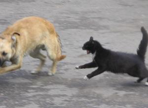 В Ростовской области бешеная кошка напала на собаку и ее хозяина