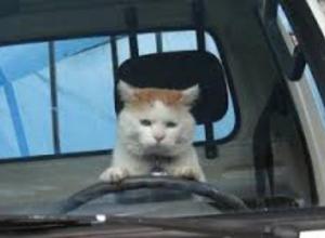 Банда автоворов под предводительством кота попала на камеру видеонаблюдения