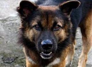 В Таганроге бродячая собака заступилась за школьницу