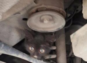 В Ростове-на-Дону ищут хозяев кота-путешественника