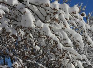 В Таганроге выпал снег, но зима не пришла