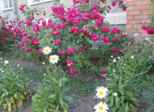 В городе продолжается конкурс «Цветущий Таганрог – 2018»
