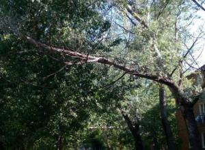Таганрожцы обеспокоены количеством аварийных деревьев