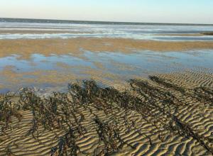 На Дону и в Таганрогском заливе сгонные явления, подача воды падает