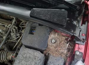 Необычную находку обнаружил под капотом своей машины автолюбитель из Неклиновского района