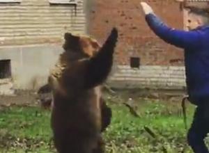 Медведица, разгуливающий по Таганрогу, оказалась актрисой цирка