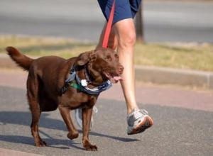 В Таганроге владельцы собак ополчились против горожан