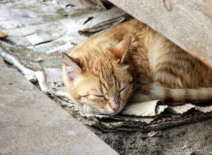 Таганрогские дети могут остаться без домашних животных
