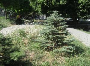 В Таганроге возле театра имени Чехова сорняки выросли выше елей