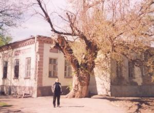 О тебе любимый город: Пушкинский дуб