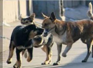 Свора бездомных собак напала на ребенка в Таганроге