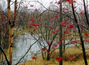 Теплая с небольшим ветром погода ожидает таганрожцев в выходные
