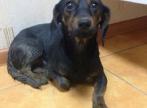 Зоозащитники и ветеринары не смогли спасти сбитого в Таганроге щенка