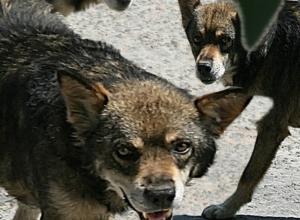 Очередное нападение собак на ребенка в Таганроге