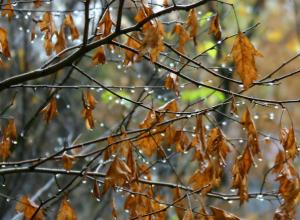 Последняя неделя уходящего года в Таганроге будет теплой и бесснежной