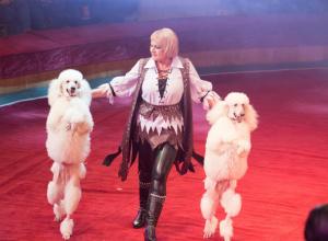 Премьера в таганрогском  цирке удалась – горожане довольны