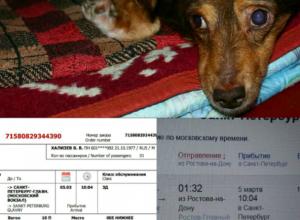Каштанчик, благодаря нашим читателям,  4 марта уезжает на операцию в Санкт-Петербург