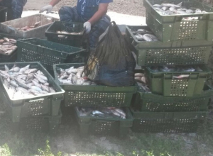В Таганрогском заливе задержали рыбака с 20 ящиками рыбы