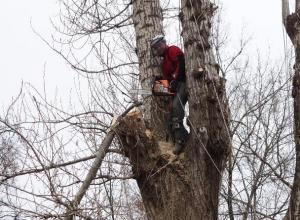 В Таганроге неудачно открыли сезон обрезки тополей