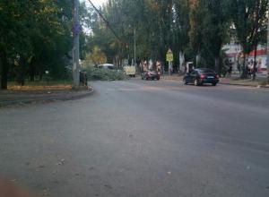 Упавшее дерево заблокировало проезжую часть в Таганроге