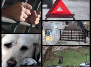 Жестокое избиение водителя и разгуливающее по Таганрогу дикое животное потрясли горожан: топ-5 событий