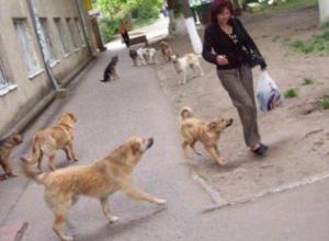 Бродячие собаки Таганрога довели жителей до петиции