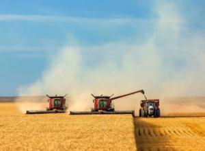 Неклиновский и Мясниковский районы вышли в передовики по сбору урожая зерновых