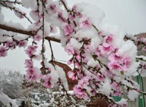 В Таганроге ожидаются заморозки