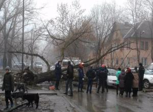 В Таганроге на проезжую часть упало дерево