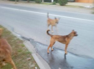 Не желающие призвать к порядку собственных псов таганрожцы довели до бешенства соседей