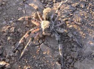 Опасного паука обнаружили туристы на набережной Таганрога