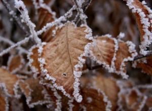 На Таганрог идут морозы