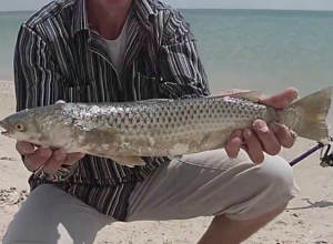 Пеленгаса и леща нельзя ловить в водоемах и на Азовском море