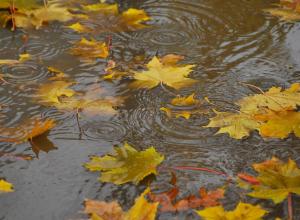 Капризная погода на этой неделе ждет жителей Таганрога