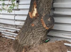Таганроженку встревожили пострадавшие при строительстве нового ЖК деревья