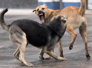 Активисты выступают за гуманные методы борьбы с численностью бродячих собак на территории Таганрога