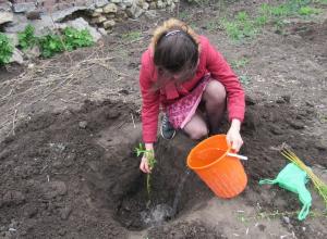 Молодые таганрожцы посадили ивы у парка