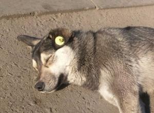 В Таганроге появятся гламурные собаки с сережками в ушах