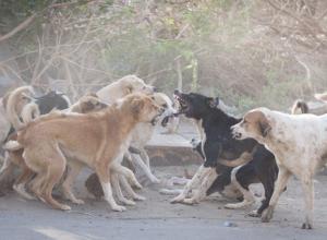 Активисты Таганрога ведут борьбу за жизнь бродячих животных