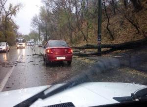 В Таганроге на автомобиль  упало  дерево