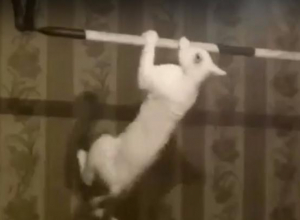Видеоролик с котом-спортсменом покорил жителей Таганрога