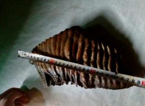 Таганроженка решила продать зуб мамонта за 2,8 млн рублей