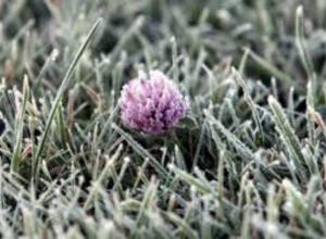 В Таганрог возвращаются зимние морозы