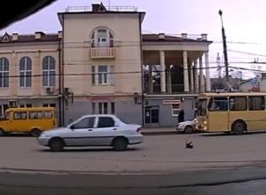 Зоозащитники обвиняют таганрогского водителя в преднамеренном наезде на щенка